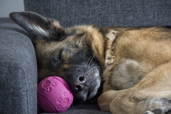 chien qui dort à l'intérieur