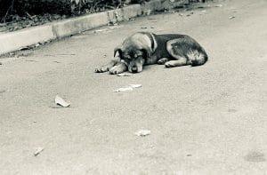 chien couché seul sur la route