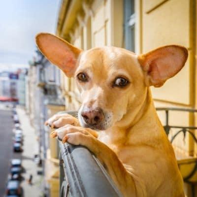 chien à l'étage sur un balcon