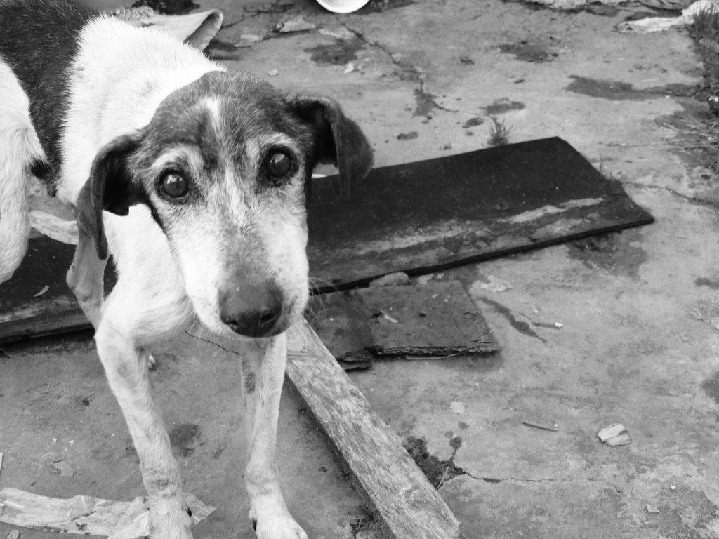 chien seul abandonné