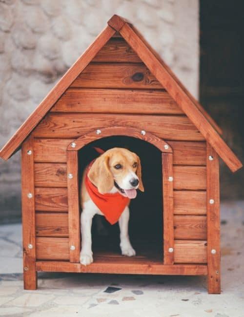 chien dans sa niche en bois