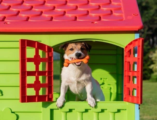 chien avec un os dans sa niche en plastique